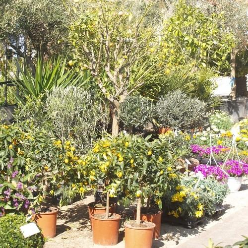 Jardinerie brissi six fours acheter vente gazon plante arbre for Plantes jardinerie