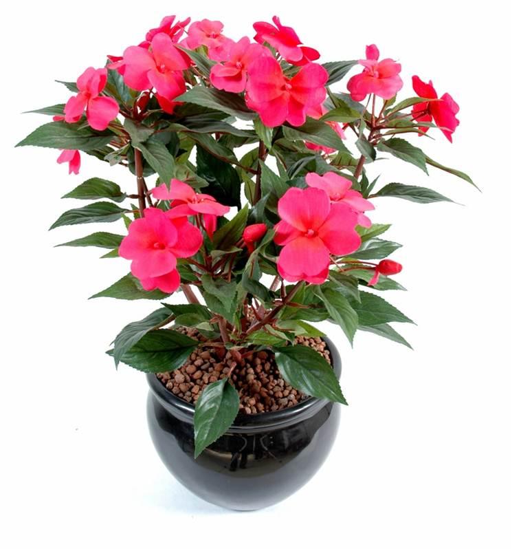 Jardinerie brissi six fours acheter vente gazon plante arbre for Plantes de bordures fleuries